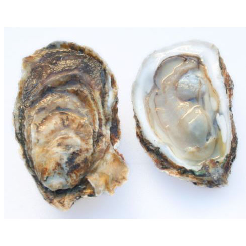 A photo of an Umami Oyster Shucked and Unshucked