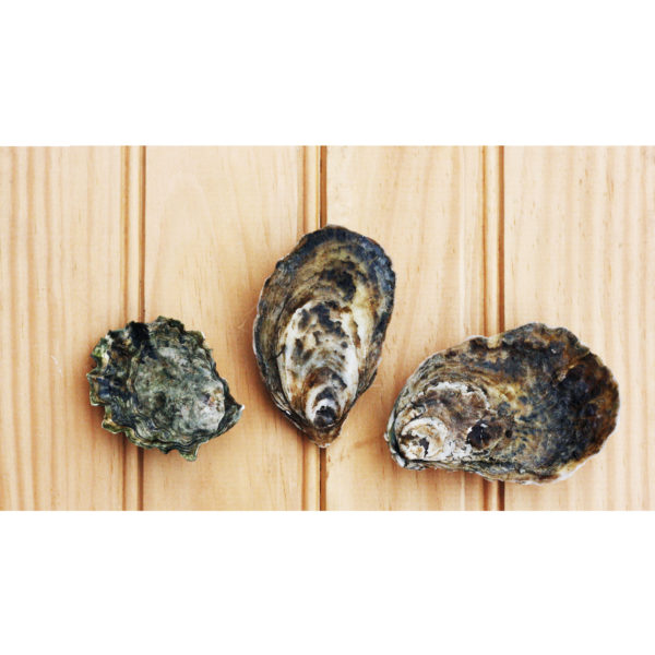 Picture of three oysters included in Element's sampler